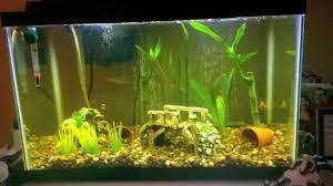 Do Aquatic Dwarf Frogs Shed Their Skin by Dwarf Frog Aquarium 1000 Aquarium Ideas