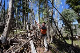 Can Cutting Down Trees Protect New Mexico's Water? — High Country News Budget Inn Farmington Nm Bookingcom Truck Treats Auto Offroad Home Facebook Used 2015 Buick Enclave For Sale Vin 5gakvbkd9fj118994 2016 Tigers Schedule Inside Roadsidenut Page 6 Roadsidearchitturecom The Companion Blog The Dark Side Of Drilling Boom Is Becoming Clearer Business Untitled Frame Rails Antique And Classic Mack Trucks General Discussion Pin By Milton Edness On Whips Pinterest Ford Trailer News Wallwork Center Posts