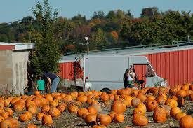 Nh Pumpkin Festival 2016 by Pumpkin Picking In New England Ct Ma Nh Vt Ny Ri
