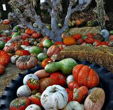Oak Glen Pumpkin Patch Address by Best Pumpkin Patches And Farms Near Los Angeles