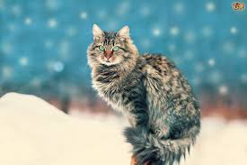 Which Christmas Tree Smells The Best Uk by 10 Tips To Help Make Your Christmas Tree Cat Proof Pets4homes