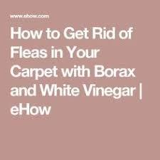Fleas Hardwood Floors Borax by 402 Best Borax For Fleas Images On Pinterest Pest Control