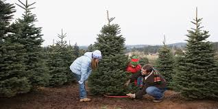Recycle Christmas Trees Vancouver Wa by Christmas Tree Farm Vancouver Wa Home Design U0026 Interior Design