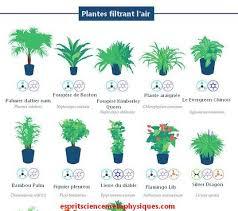 plante verte dans une chambre à coucher top 18 des plantes d intérieur dépolluantes qui purifient l air