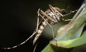 mückenfalle selbst de