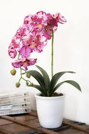 soins orchidee en pot 28 images orchid 233 e phalaenopsis