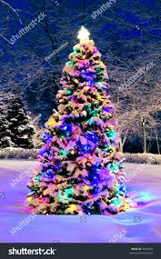 Winterberry Christmas Tree by Decorated Christmas Tree Outside Lights Covered Stock Photo