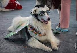 Old Westbury Gardens Dog Halloween by The Martial Arfs Upcoming Long Island Dog Events