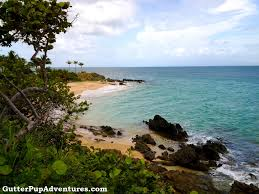 100 Vieques Puerto Rico W Hotel The Beach Near Resort On The Island Of Near