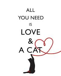 cat quotes all you need is and a cat picture quotes