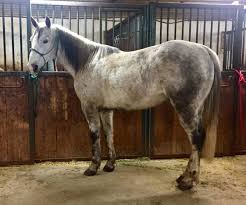 Kalona Ia Horse Auction - Pictures Of Horses Amish Horses April 2016 For Sale Featured Listings Kalona Homes For Property Search In Single Familyacreage Sale Iowa 20173679 Tours Chamber September 2014 Ia Horse Auction Pictures Of Amana Colonies Day Trip To Girl On The Go