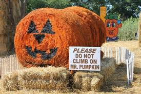 Pumpkin Patches Maryland Heights Mo by 7 Pumpkin Patch Maryland Heights Mo Ava Duvernay Gives