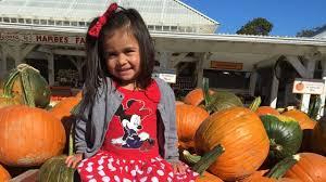 Pumpkin Picking Riverhead by Pumpkins Corn Mazes On Long Island Newsday