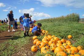 Ohio Pumpkin Festivals 2017 by Your Guide To The Perfect Weekend Oct 12 U201317 2017 Honolulu