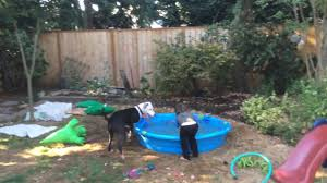 Dog Relaxes In Pool | Jukin Media Grumpy Senior Dog In The Backyard Stock Photo Akchamczuk To With Love January 2017 Friendly Ideas In Garden Pricelistbiz Portrait Of Female Boxer Dog Standing On Grass Backyard Lavish Toys For Dogs Toy Organization February Digging Create A Sandbox Just For His Digging I Like Quite Moments Fall Wisconsin Quaint Revival Yesterday Caught My Hole Today Unique Toys Architecturenice Cia Fires Since Sniffing Bombs Wasnt Her True Calling Time A View From Edge All Love Part Two