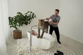 wildes wohnzimmer russen models raubkatzen zdfinfo