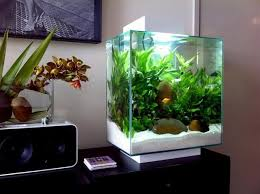 9 best akvaario images on aquarium ideas fish tanks