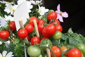 vegetable garden grow