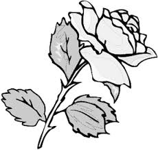 Pencil Drawing Of Roses Natures Gift To The Art World
