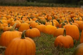 Pumpkin Farms In West Michigan by Settle In To Fall With A Trip To Area Haunted House Pumpkin Patch