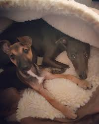 Snoozer Cozy Cave Pet Bed by Snoozer Luxury Cozy Cave Dog Bed U2013 Care 4 Dogs On The Go