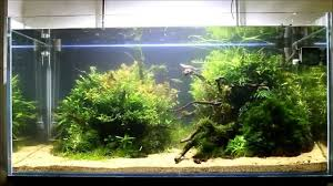 Aquascaping - Aquarium Tutorial Layout Maintenance By Giuseppe ... Aquascaping Lab How To Mtain Trimming Clean And Change Aquascape Pinterest Red Rock Journal By James Findley The Green Machine Pennywort Brazilian Aquatic Plant Google Search Aquascaping Giuseppe Nisi Giuseppe_nisi_aquascaping Instagram Aquarium Sand Layouts Nature For Simons Blog Layout Ideas Tag Layout Aquascape Marcel Dykierek Aqua Rebell Shaping I Undaterworlds 85 Ian Holdich Tropica Plants