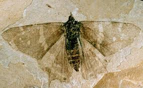 message from the eocene re reading the florissant fossil beds kcet