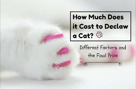 cost to declaw cat how much does it cost to declaw a cat different factors and the
