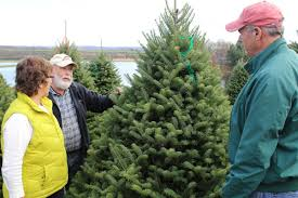 Dush Family Has Made Pine Tree Barn A Christmas Tree Destination ... Ricciardis Tree Farm A Family Tradition Since 1984 Looking For A Christmas Tree Life Culture News Pine Barn Signature Series Wound Warrior Project The Daily Record Ohio Find It Here Christmas Farms In Ohio Rainforest Islands Ferry Wooster Oh Summer 16 Pinterest Catchy Collections Of Fabulous Homes Treehouses Mohicans Rustic Wedding Venue House Will Moses Gallery Green Acres
