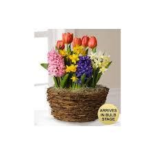 blooming bulb basket the secret garden