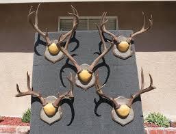 how to mount deer antlers crown mount youtube