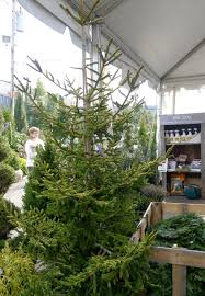Middleburg Christmas Tree Farm For Sale an urban cottage a different tree