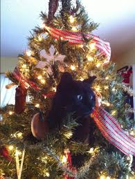 Simons Cat Christmas Tree by Why Do Cats Like Christmas Trees A Scientist Explains Inverse