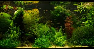 Introducing My Tank - Page 5 - Aquascaping - Aquatic Plant Central Layout 22 George Farmer Tropica Aquarium Plants Aquacarium Aquascaping Live Bulk Fish Food Lifelike Hugo Kamishi Trimming Aquatic Stem Good Time For New Youtube Lab Tutorial River Bottom Natural Aquarium Plants With Pearlweedhow To Start A Carpet Of Pearlweed How To Create Your First Aquascape Love Rotala Sp Njenshan Pinterest Ideas From The Art The Planted Basics Substrate Stainless Steel Kit Tank