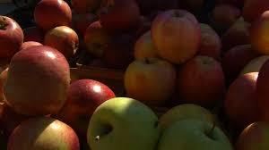 Punkin Chunkin Delaware Cancelled by Bridgeville Hosts 26th Annual Apple Scrapple Wboc Tv 16