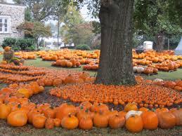 Pumpkin Patch Ct by Memorial Umc Quick Enews Pumpkin Patch Download Time Has Been