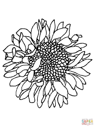 Head Of Sunflower Coloring Page In