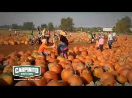 Largest Pumpkin Ever Grown 2015 by 2015 Carpinito Bros Pumpkin Patch Youtube