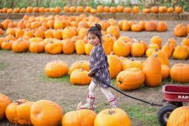 Pumpkin Patch Half Moon Bay by Happy Halloween From Farmer John U0027s Pumpkin Patch