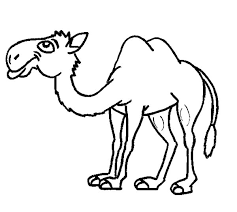 Thin Bactria Camel Coloring Pages
