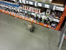 The Best Help I've Ever Found At The Home Depot. : Pics Alluring X Log Cabin Siding Board To Divine Building Materials Cstruction Supplies The Home Depot Canada 8 Dead In New York Rampage Truck Attack On Bike Path Lower Shopper Refuses To Pay 28 Late Fee Sues After Credit Pickup Truck Rental Rates Owners Face Uphill Climb In Atticat Insulation Blower Wikipedia Concrete Mixer Youtube Julypenske Moving Community Solutions At Terrorist Sayfullo Saipov Drives Through Lower