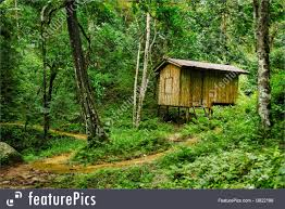 100 House In Forest Wooden RoyaltyFree Stock Picture