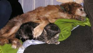 Non Shedding Dogs Small To Medium by Five Dog Breeds That Like And Are Good With Cats Pethelpful