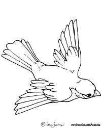 Perfect Coloring Pages Of Birds Gallery Colorings Children Design Ideas