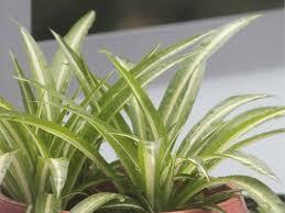 10 ungiftige zimmerpflanzen für katzen hübsch 100