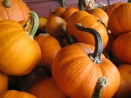 Pumpkin Patch North Austin Tx by Bastrop