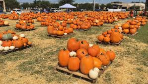 Pumpkin Patch Waco Tx by Texas Crop And Weather Report Oct 3 2017 Agrilife