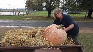 Seymour Pumpkin Festival 2017 by Giant Pumpkin Competition And Harvest Festival Murmungee Home