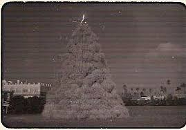 Tumbleweed Christmas Tree Pictures by Did You Know Chandler Tumbleweed Tree Is One Of A Kind Kjzz