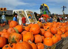 Skinny Bones Pumpkin Patch Food by Best 25 Local Pumpkin Patch Ideas On Pinterest Pumpkin Field